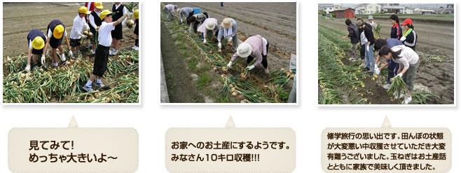 収穫体験1・淡路島・瓦・体験・観光・グルメ・「かわらや」