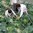 団体収穫ギャラリー・淡路島・瓦・体験・観光・グルメ・「かわらや」